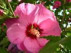 Au centre de la fleur....