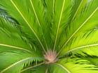 Au Coeur d'un petit palmier