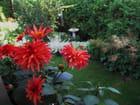Au jardin de Colette
