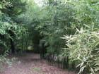 Au milieu des bambous