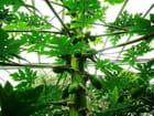Au paradis des plantes 1