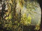Au petit matin en forêt