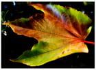 ...automne..