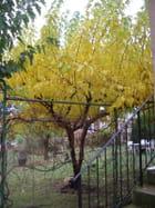automne à la campagne