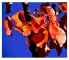 ..automne..couleur..