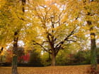 Automne d'or