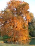 automne flamboyant