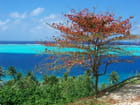 Automne Polynésien