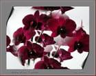 Autour d'une orchidée.