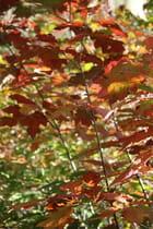 Autre branche d'automne