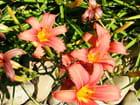 Autre fleur oranger