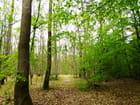 Autre forêt de Normandie au printemps