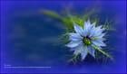 Aux amoureux du bleu....