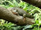 Avachi sur sa branche