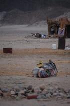 Aventure chez les Bédouins