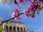 Avignon et  fleur