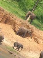 Bain d'éléphants