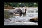 Bain et sois des éléphants
