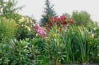 Balade dans les hortillonnages-8
