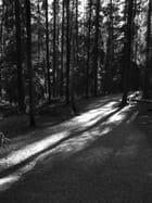 Balade sous les bois
