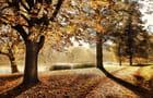Balade sous les feuilles.