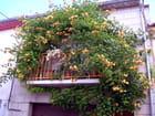 Balcon bien fleuri