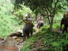 Balade dans la jungle à dos d'éléphant