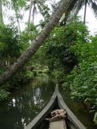 Ballade sur les backwaters
