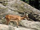 Bambi (deux)
