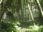 bambous en fête