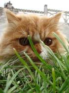 Bandit le chat 2