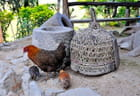 Basse-cour d'une ferme ifugao