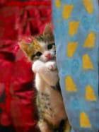 Baudet, chaton