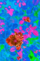 Beauté de fleurs! 2