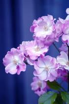 Beauté de fleurs! 3