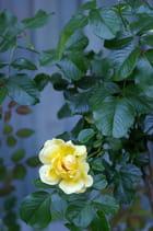 Beauté de fleurs! 4