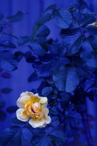 Beauté de fleurs! 5