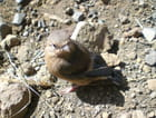 Bébé pinson tombé du nid