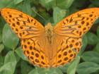 Belle orange