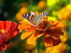 Belles couleurs dans un jardin.