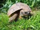 benett la tortue