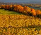 Bienvenue à l'automne