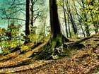 Bois des Monts
