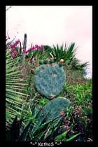 Bonhomme cactus