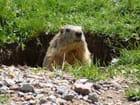 Bonjour, dame Marmotte!