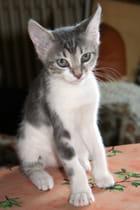 Bonjour, je suis Kitty...2 mois et demi
