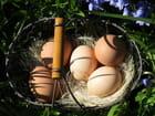 Bonnes Fêtes de pâques à tous et à toutes