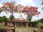 Bouddha sous un flamboyant