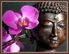 Bouddhattitude...