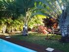 Bougainvillées et palmiers